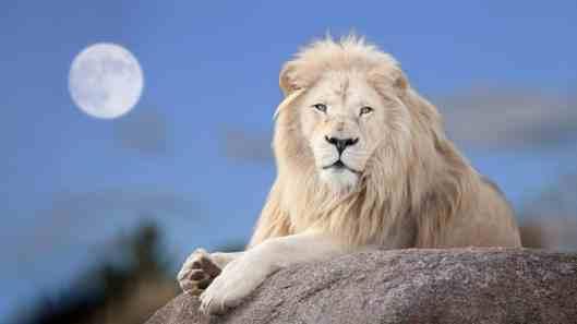 aquarius-full-moon-lion.jpg